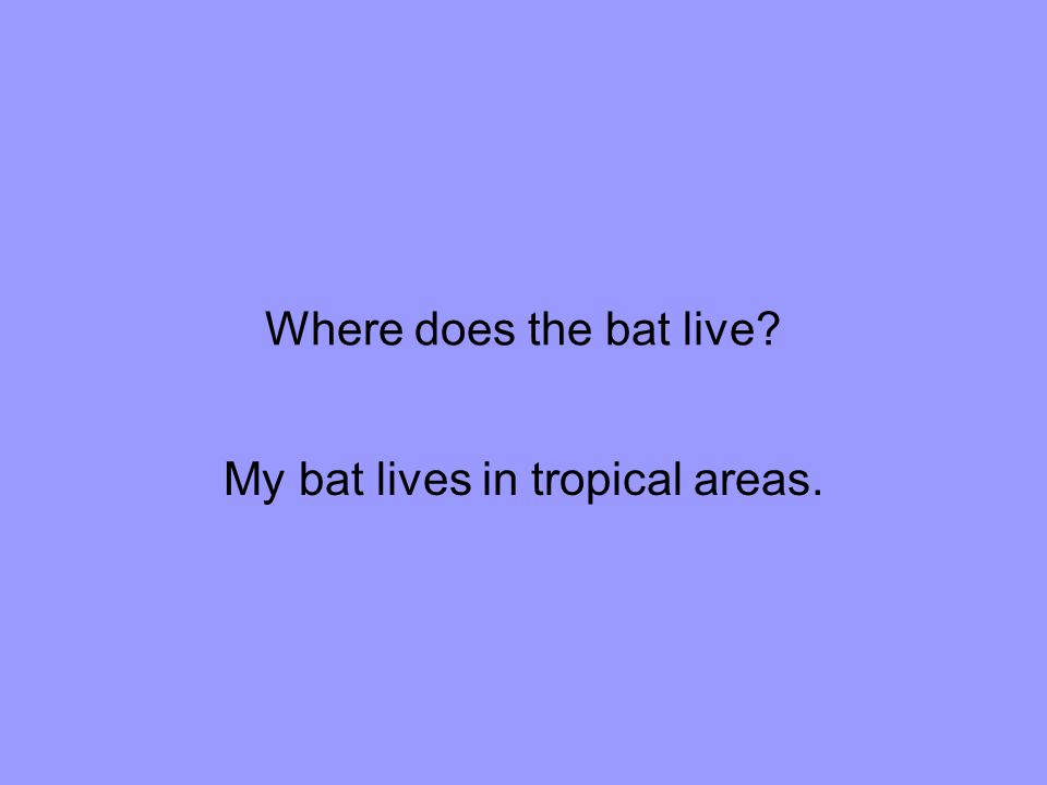 My bat lives in tropical areas.
