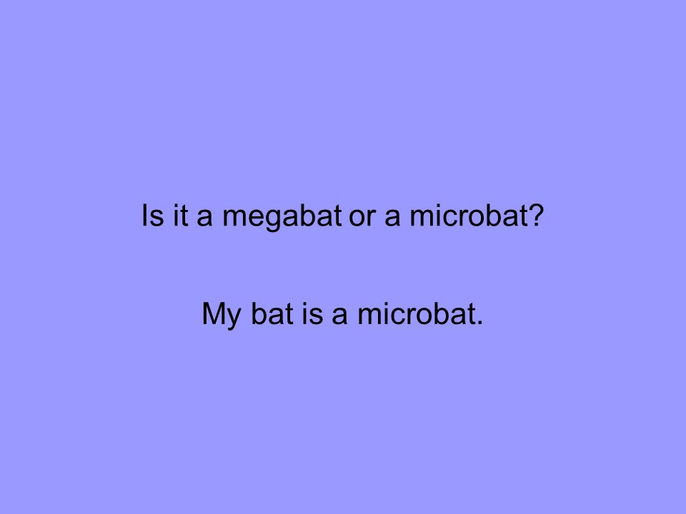 Is it a megabat or a microbat