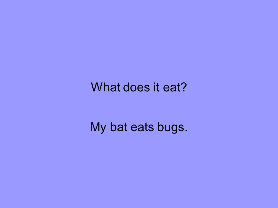 What does it eat My bat eats bugs.