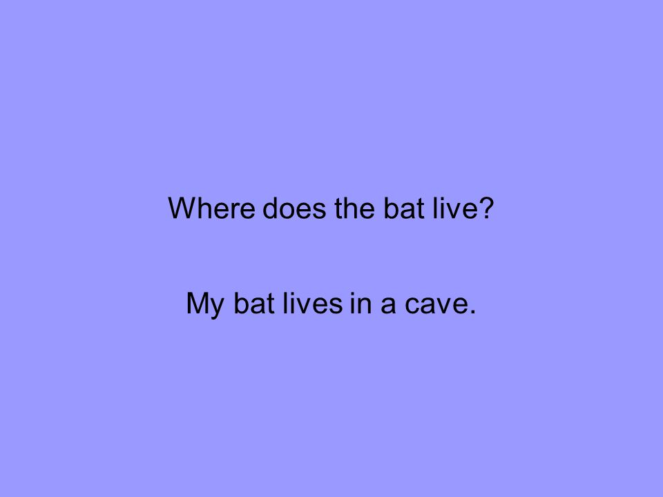 Where does the bat live My bat lives in a cave.