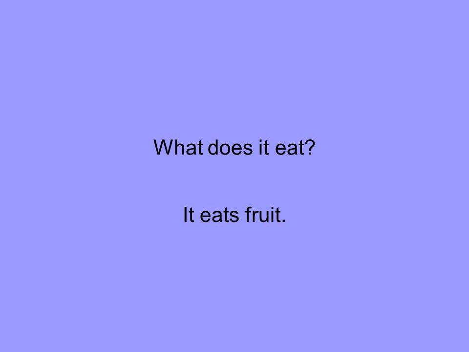 What does it eat It eats fruit.