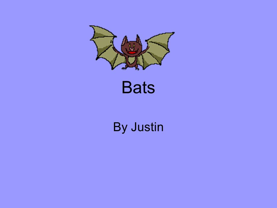 Bats By Justin