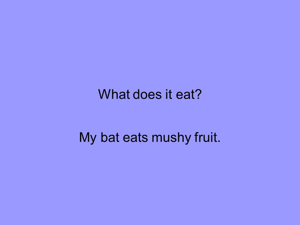 What does it eat My bat eats mushy fruit.