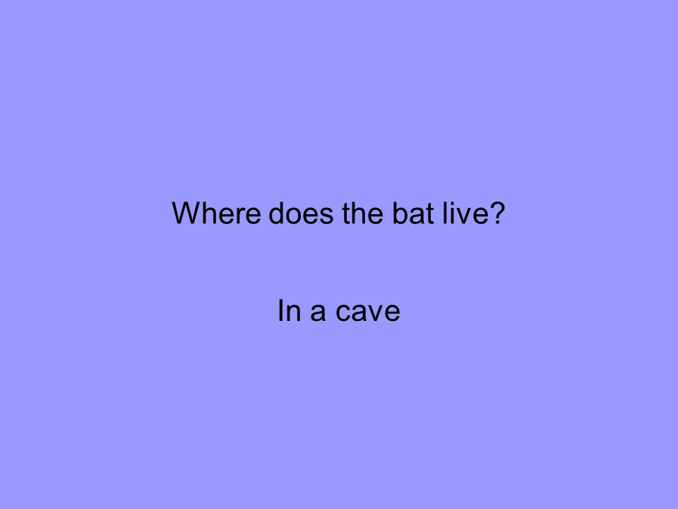 Where does the bat live In a cave