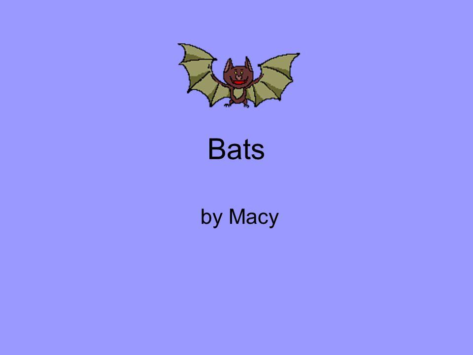 Bats by Macy
