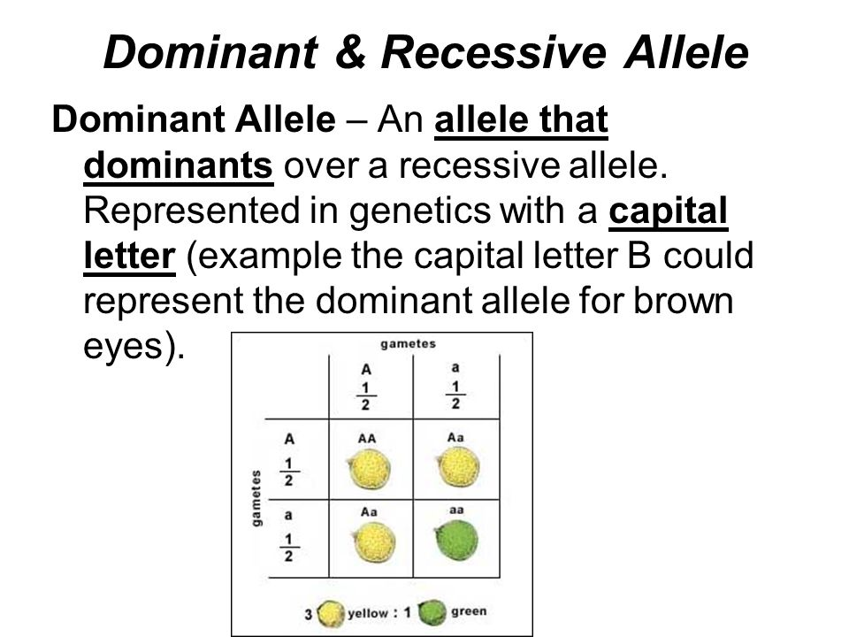 Dominant Recessive The gallery for -->...