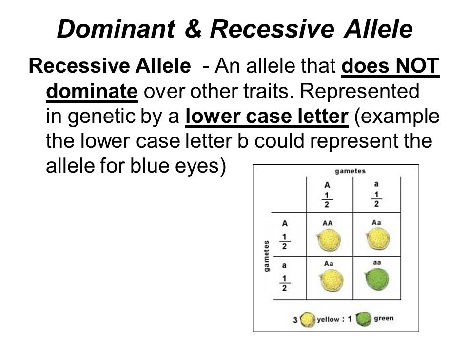 Dominant & Recessive Allele