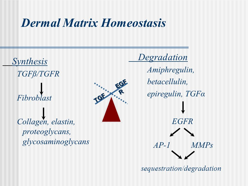 Dermal Matrix Homeostasis