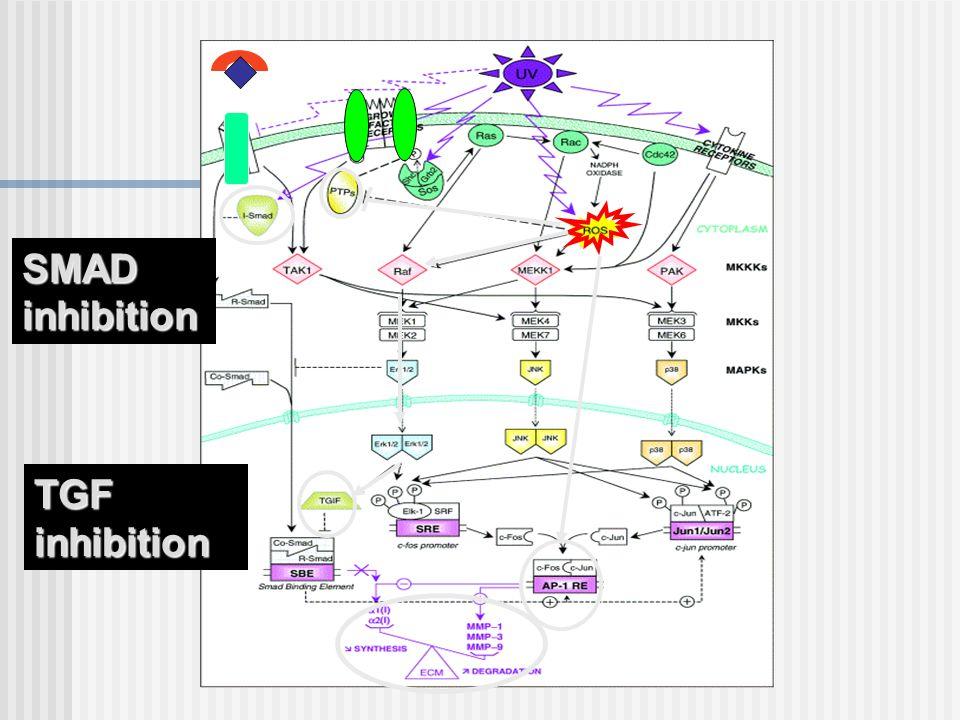 SMAD inhibition TGF inhibition
