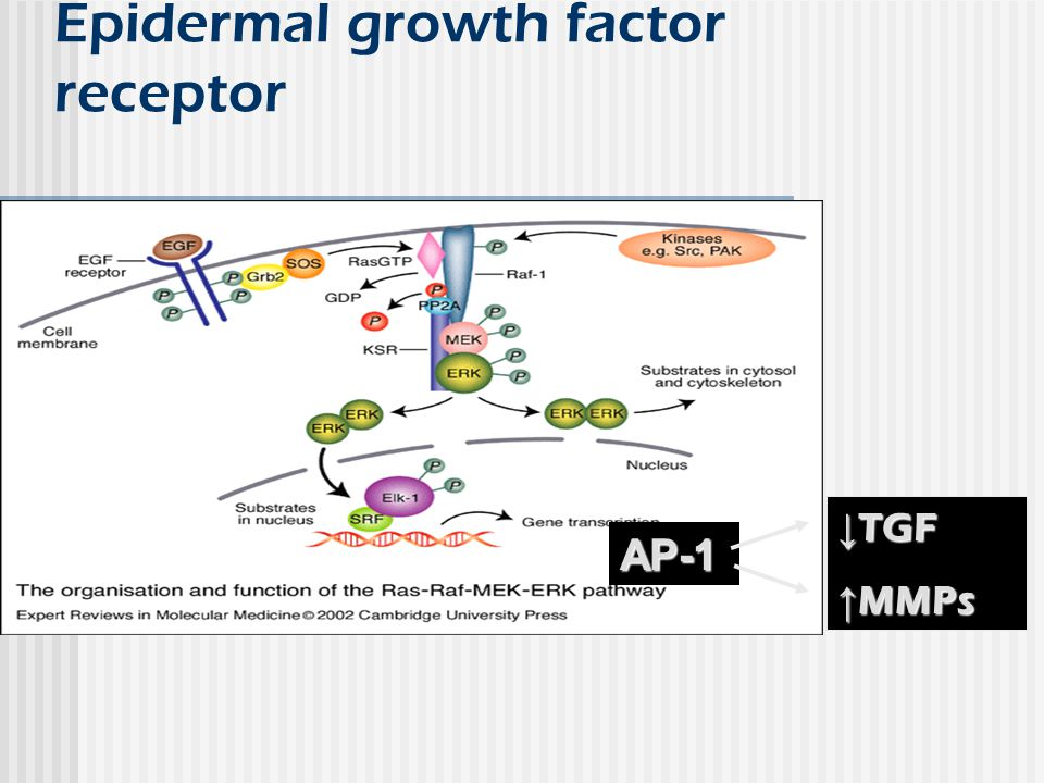 Epidermal growth factor receptor