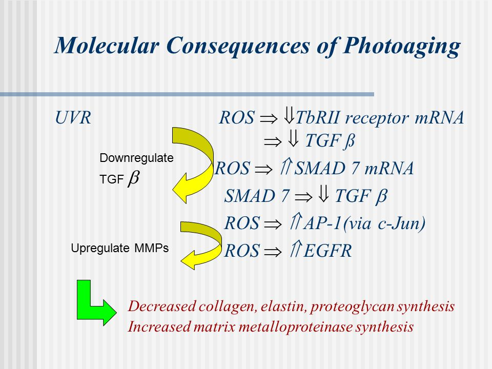 Molecular Consequences of Photoaging