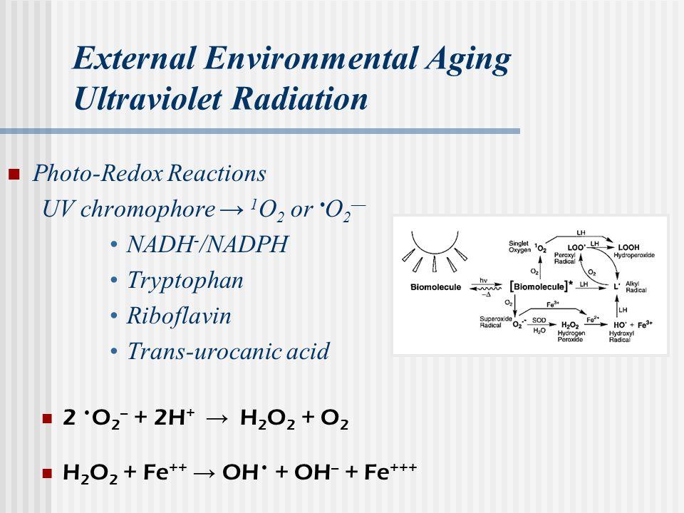 External Environmental Aging Ultraviolet Radiation