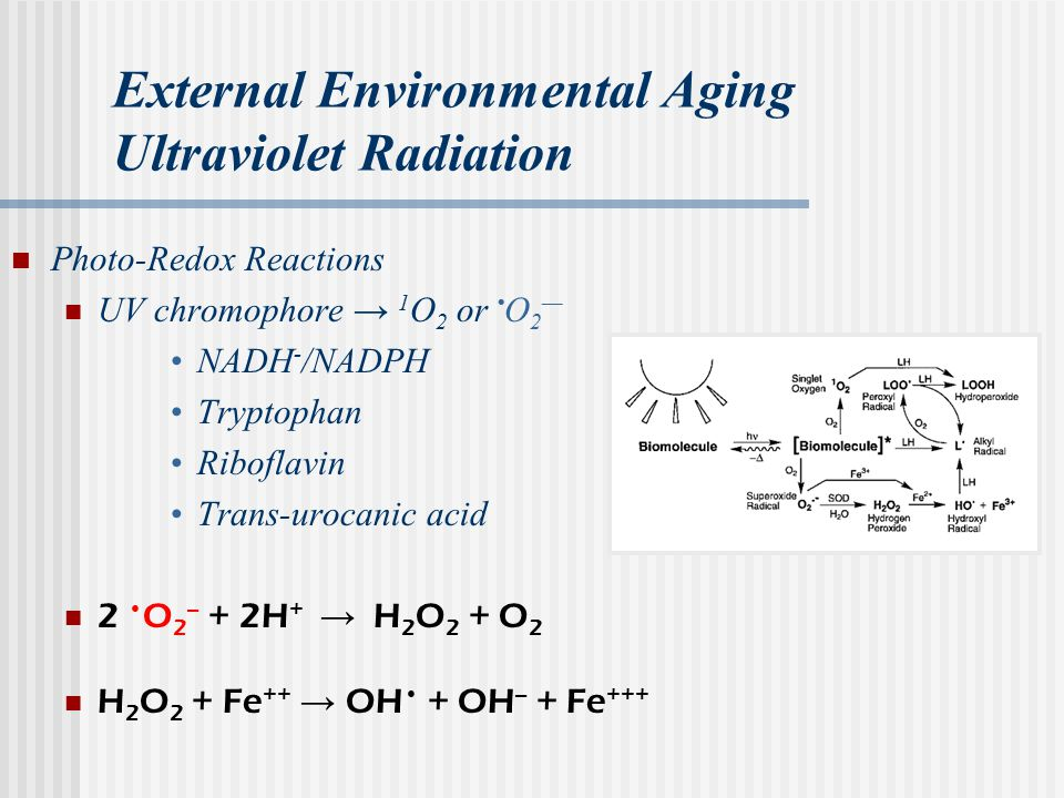 External Environmental Aging Ultraviolet Radiation