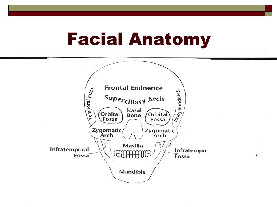 Facial Anatomy