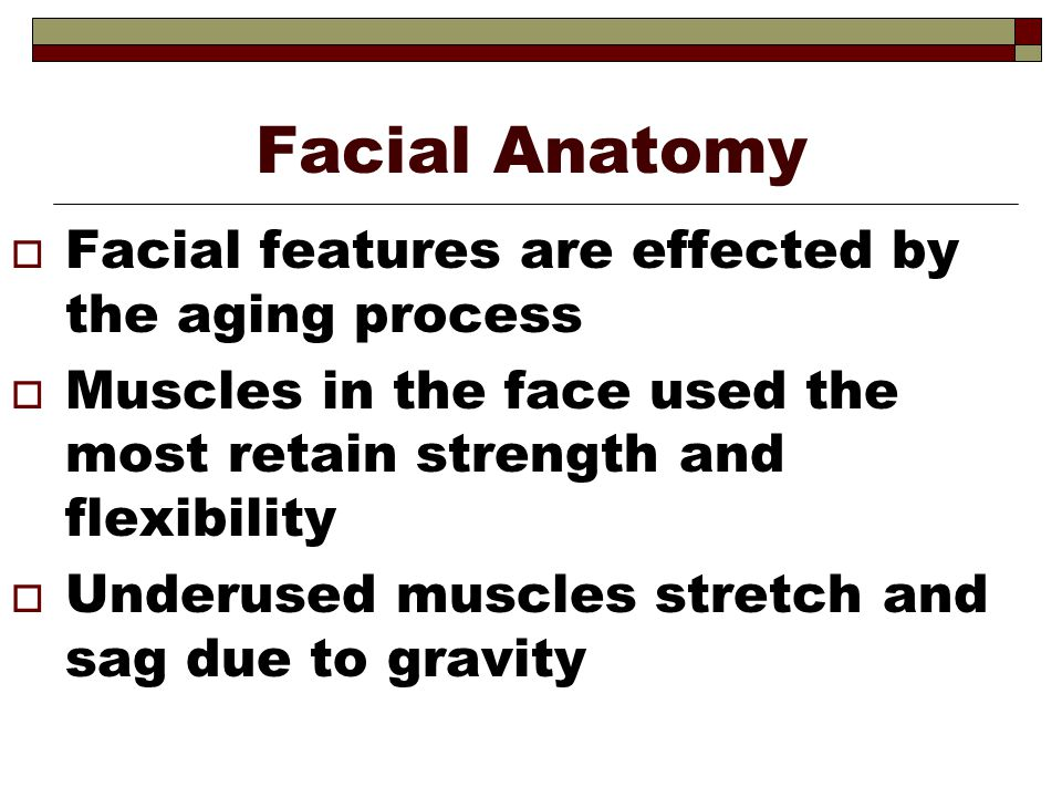 Facial Anatomy Facial features are effected by the aging process