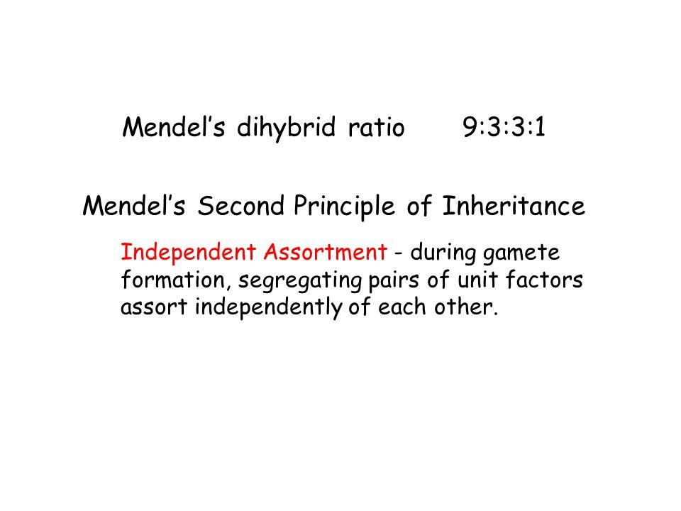 Mendel's dihybrid ratio 9:3:3:1