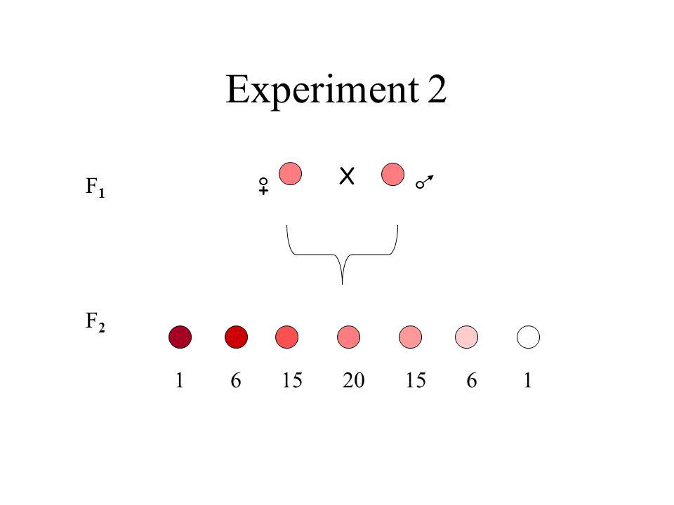 Experiment 2 X F1 + o o F2 1 6 15 20 15 6 1