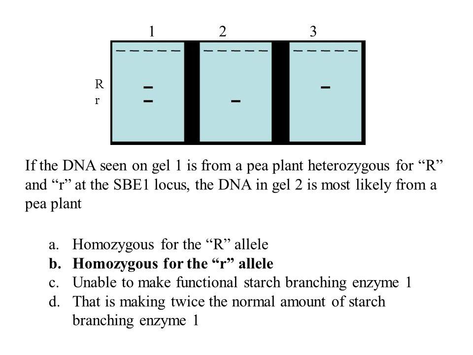 Homozygous for the R allele Homozygous for the r allele