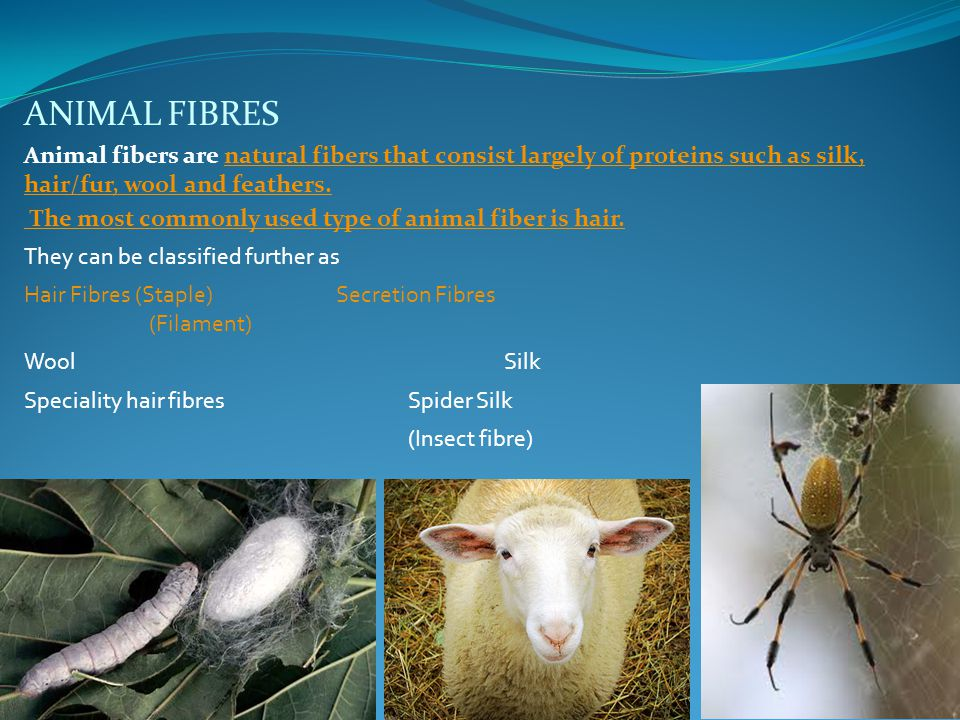 ANIMAL FIBRES Animal fibers are natural fibers that consist largely of proteins such as silk, hair/fur, wool and feathers.