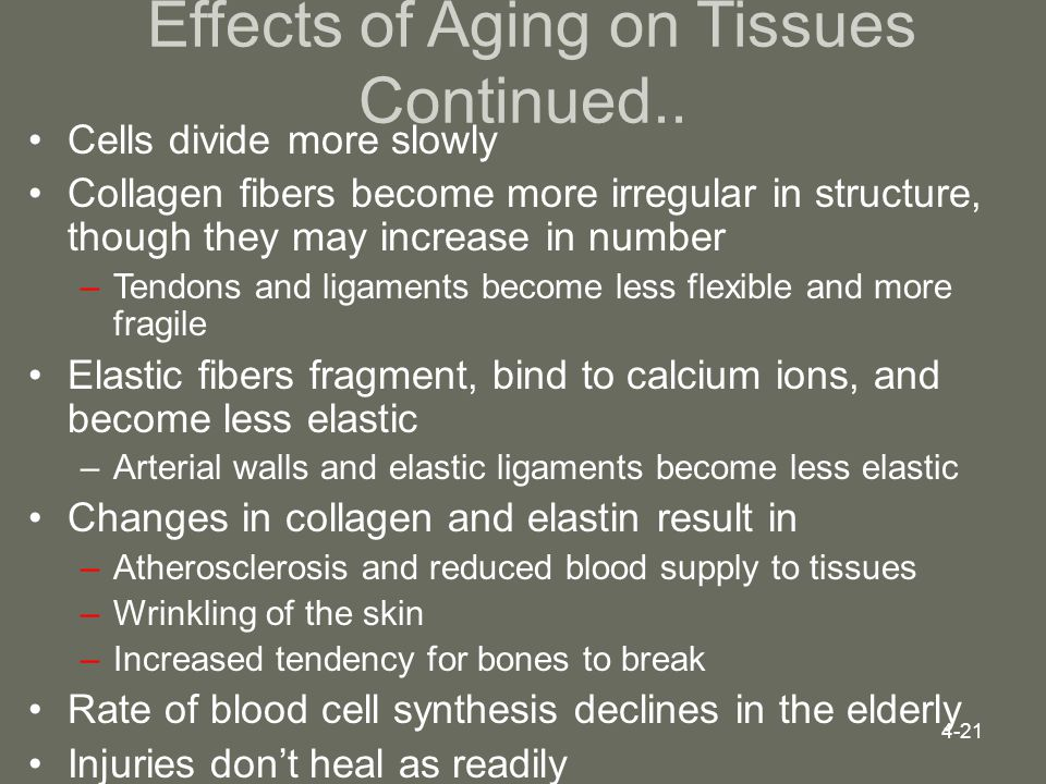 Effects of Aging on Tissues Continued..