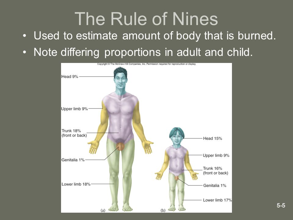 The Rule of Nines Used to estimate amount of body that is burned.