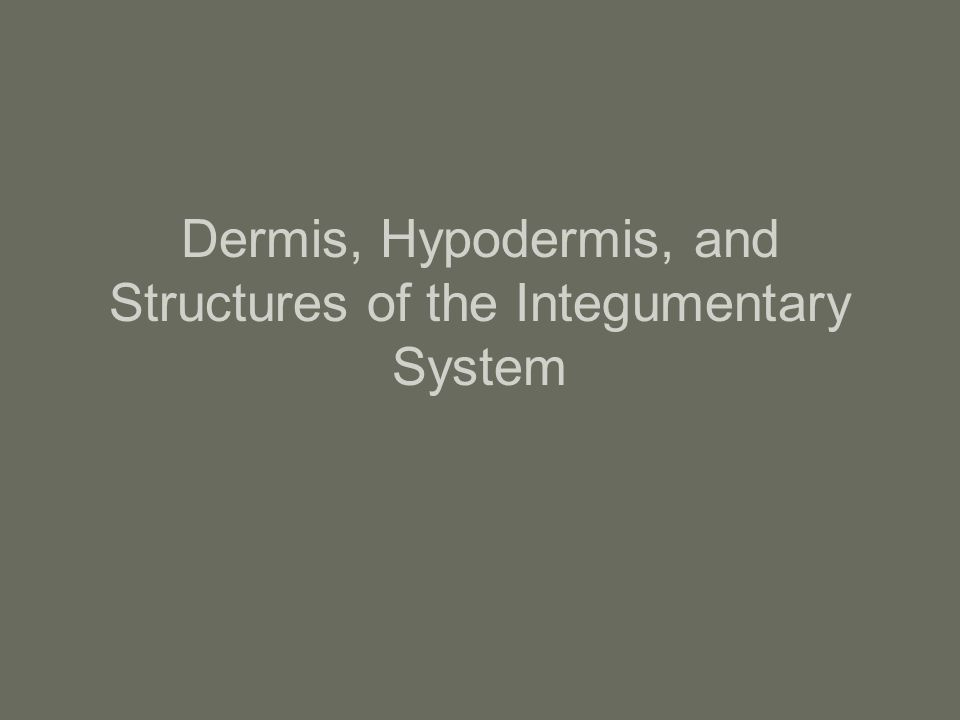 Dermis, Hypodermis, and Structures of the Integumentary System