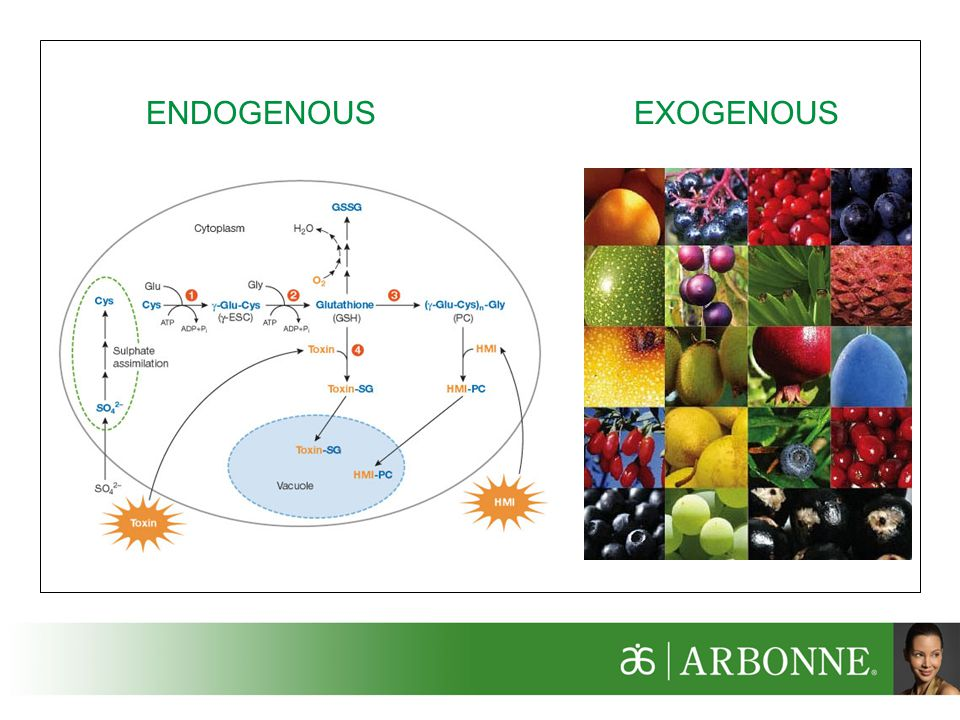 ENDOGENOUS EXOGENOUS