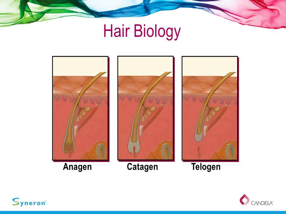 Hair Biology Anagen Catagen Telogen