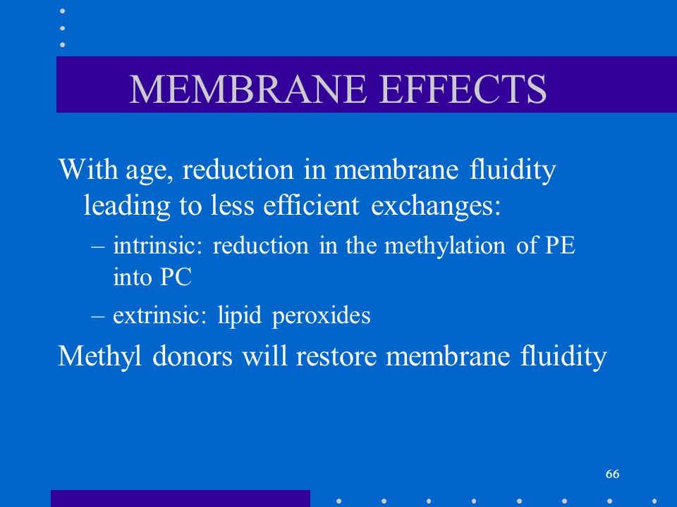 MEMBRANE EFFECTS With age, reduction in membrane fluidity leading to less efficient exchanges: intrinsic: reduction in the methylation of PE into PC.