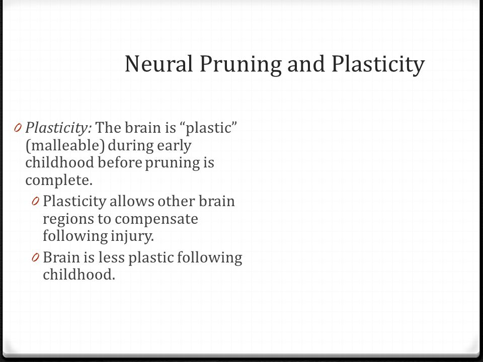 Neural Pruning and Plasticity