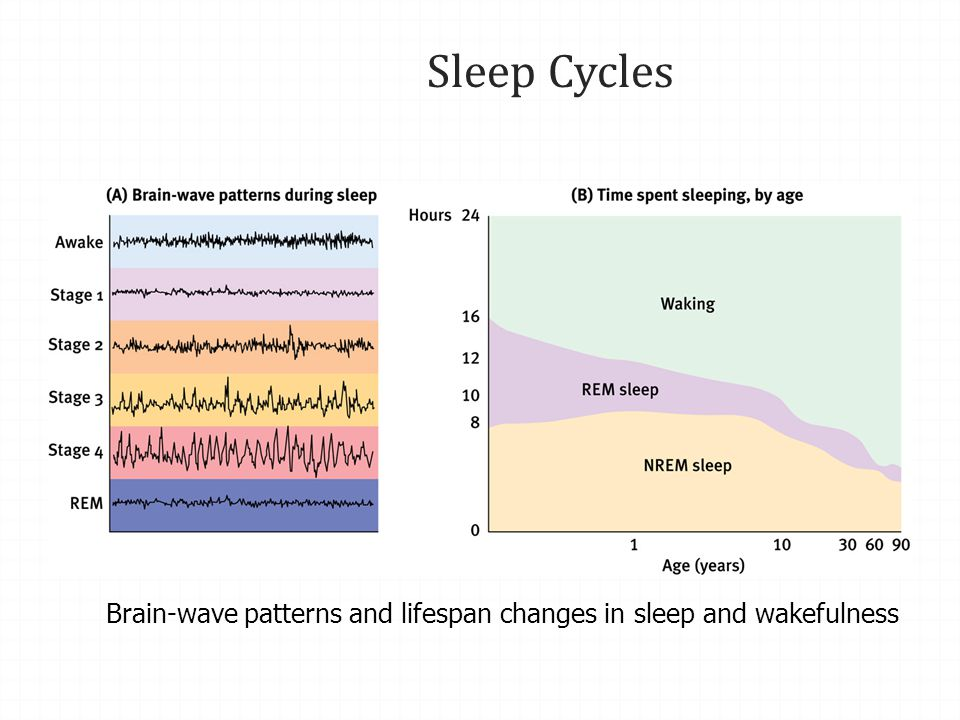 Sleep Cycles Brain-wave patterns and lifespan changes in sleep and wakefulness