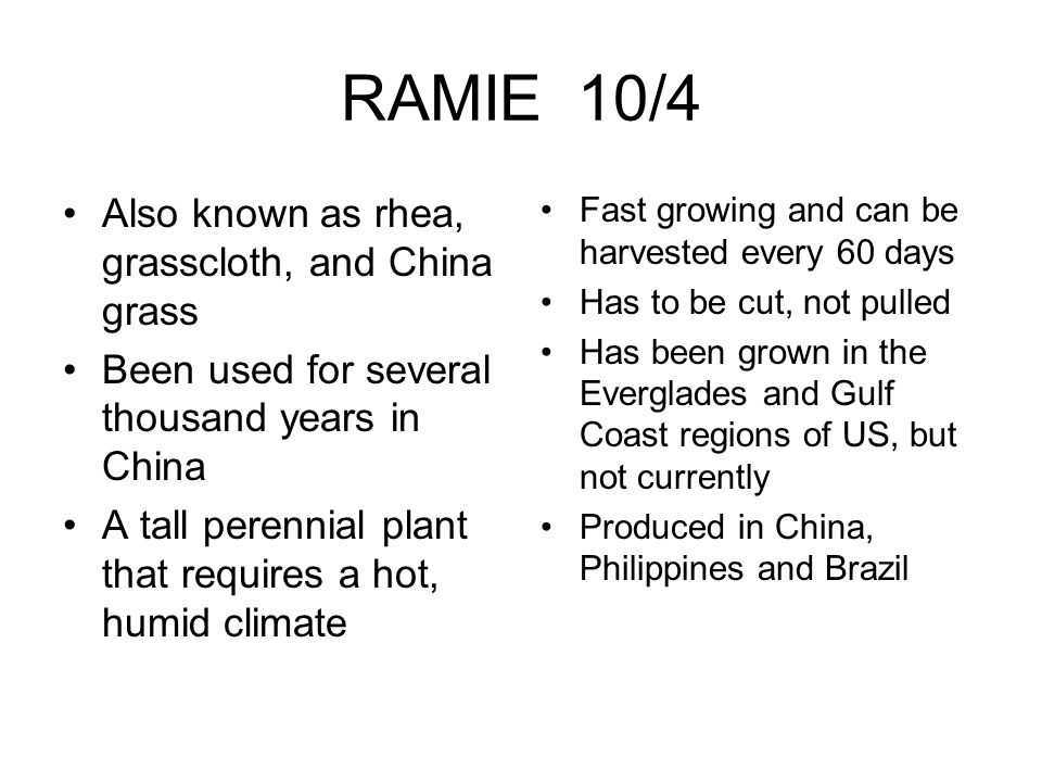 RAMIE 10/4 Also known as rhea, grasscloth, and China grass