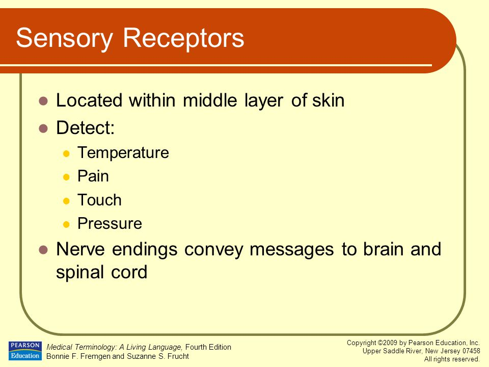 Sensory Receptors Located within middle layer of skin Detect:
