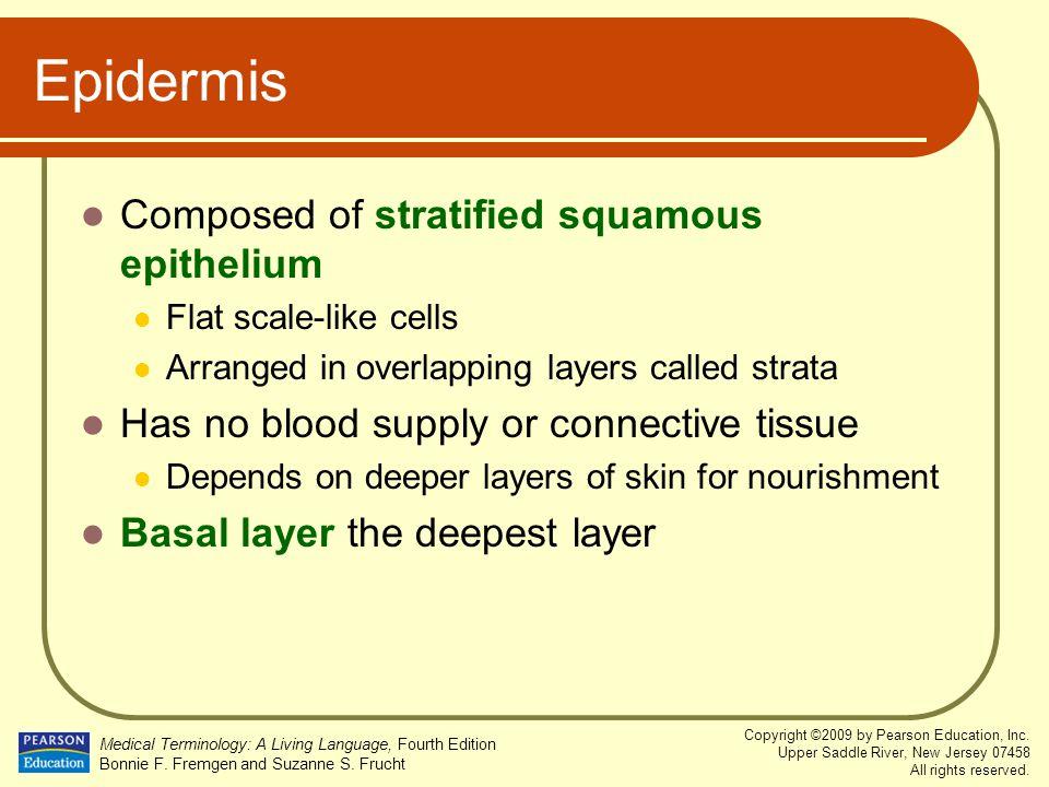 Epidermis Composed of stratified squamous epithelium