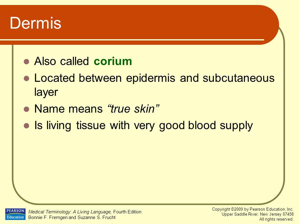 Dermis Also called corium