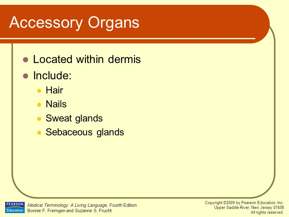 Accessory Organs Located within dermis Include: Hair Nails