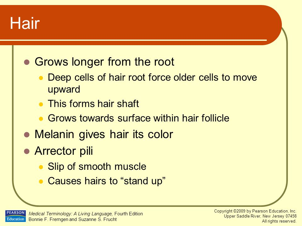 Hair Grows longer from the root Melanin gives hair its color