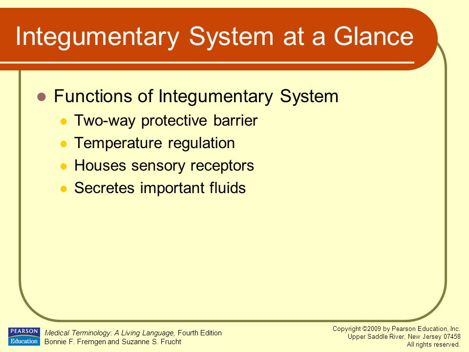 Integumentary System at a Glance