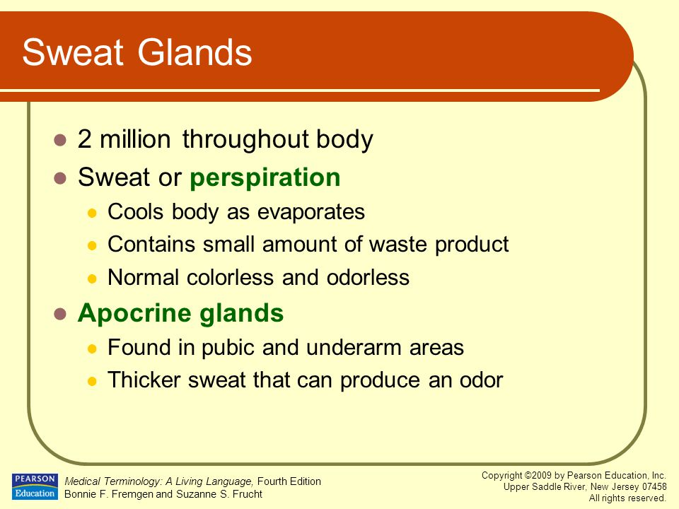 Sweat Glands 2 million throughout body Sweat or perspiration