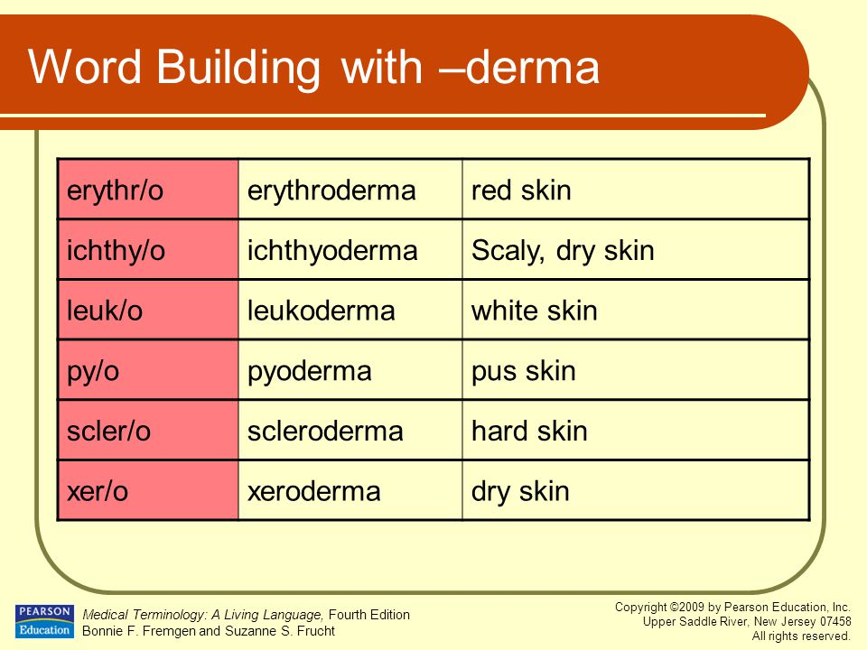 Word Building with –derma