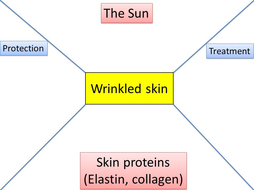 The Sun Wrinkled skin Skin proteins (Elastin, collagen) Protection
