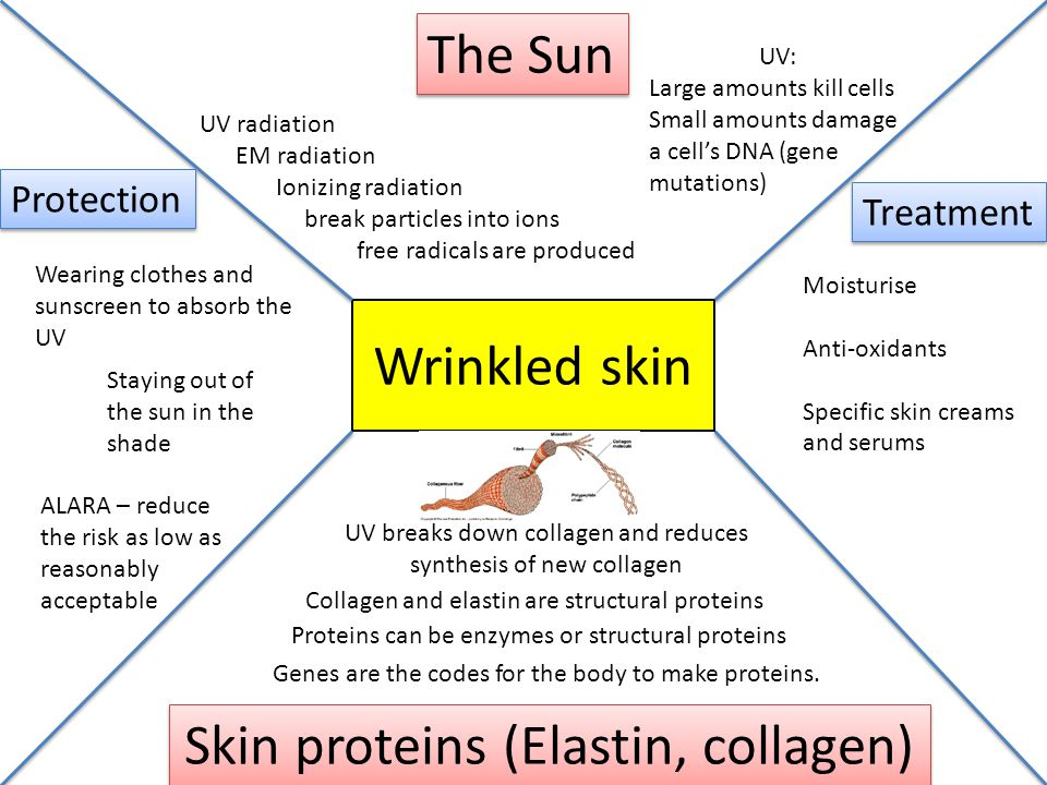 Skin proteins (Elastin, collagen)
