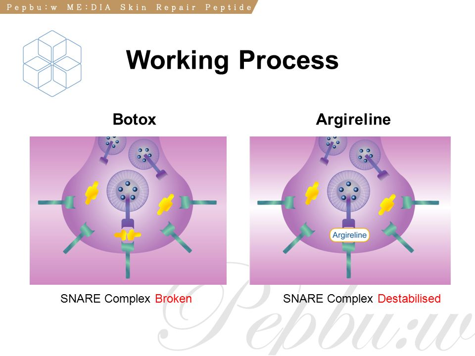 Working Process Botox Argireline SNARE Complex Broken