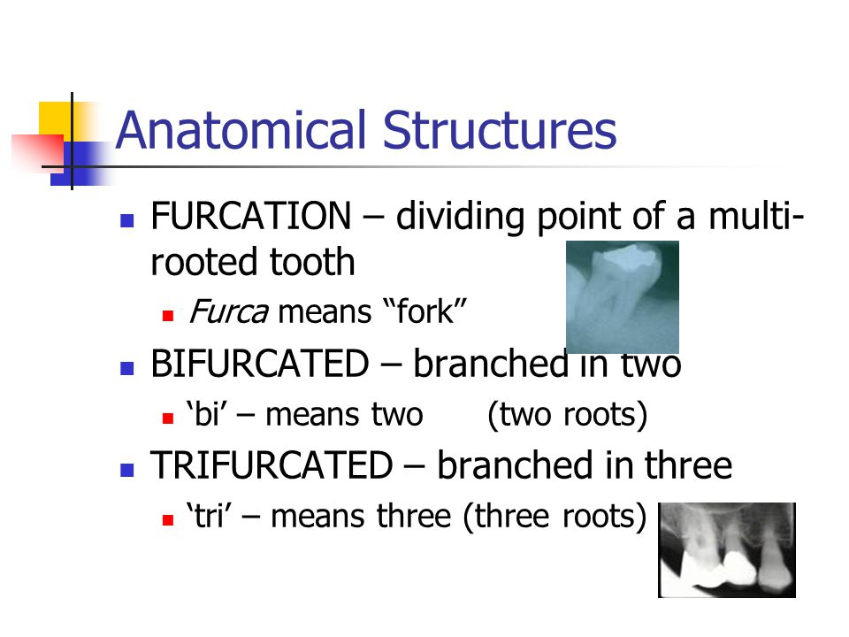 Anatomical Structures