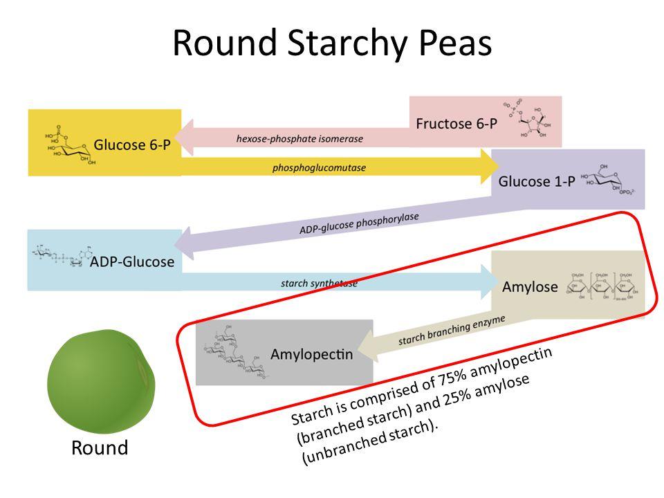 Round Starchy Peas Round