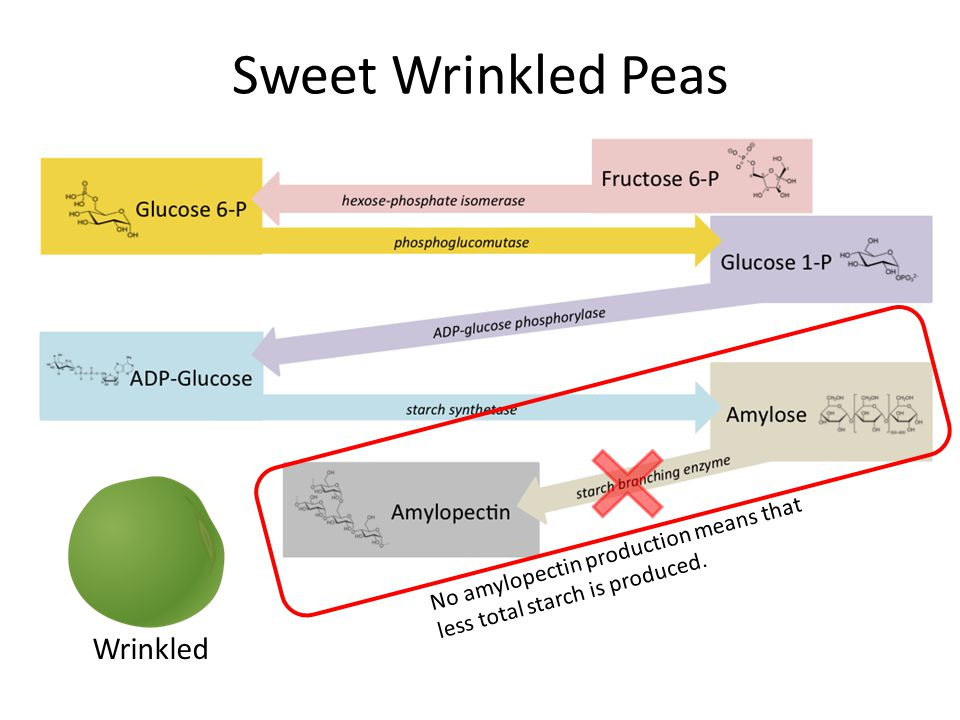 Sweet Wrinkled Peas Wrinkled