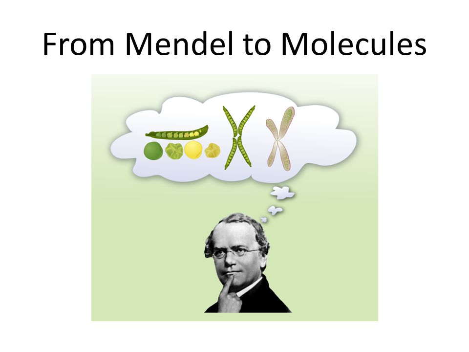 From Mendel to Molecules