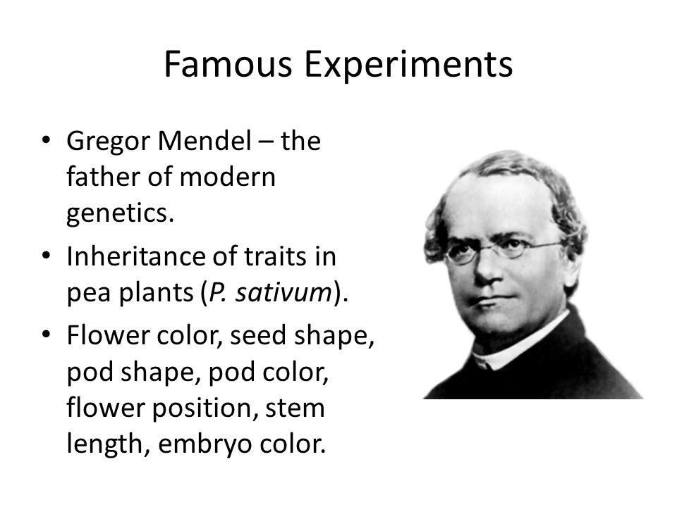 Famous Experiments Gregor Mendel – the father of modern genetics.