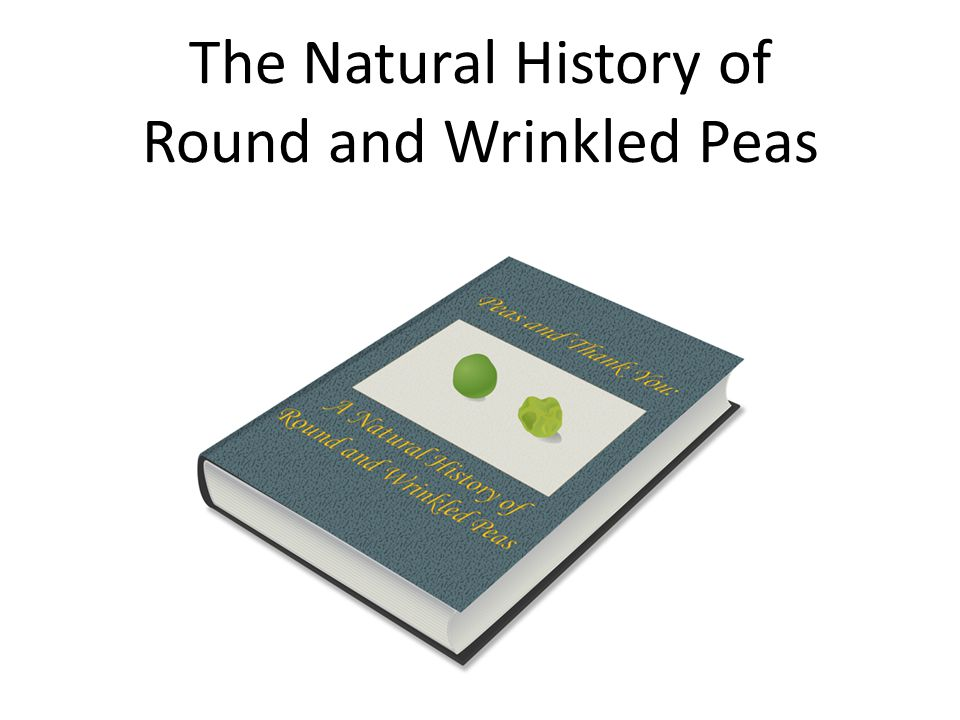 The Natural History of Round and Wrinkled Peas