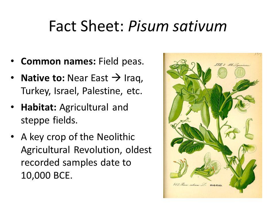 Fact Sheet: Pisum sativum